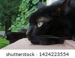 Stock photo black cat in relaxed pose 1424223554