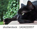 Stock photo black cat in relaxed pose 1424223557