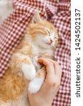 Stock photo cropped vertical portrait of little cute ginger kitty enjoys stroking caucasian girl s hand 1424502137