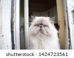 portrait of a shaggy cat with... | Shutterstock . vector #1424723561