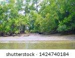 A Photo Of River Bank At Klong...