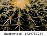 beautiful sharp thorn pattern... | Shutterstock . vector #1424753264