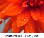 Red Flower Macro With Water...