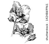 wild flowers roses isolated.... | Shutterstock .eps vector #1424869961