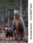 brown bear mom watching with cub   Shutterstock . vector #1424887364