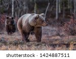 brown bear family in the forest   Shutterstock . vector #1424887511
