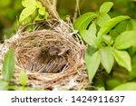 close up one cute baby light...   Shutterstock . vector #1424911637