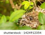 close up one cute baby light...   Shutterstock . vector #1424912354
