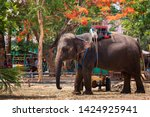 the elephant that is prepared...   Shutterstock . vector #1424925941