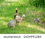 goose family at a lake   Shutterstock . vector #1424991284