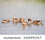 goose family at a lake   Shutterstock . vector #1424991317