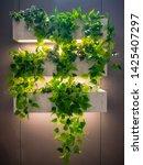 Vertical Garden Green Ivy In...