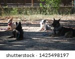 canine portrait  dog obedience...   Shutterstock . vector #1425498197