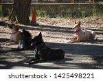 canine portrait  dog obedience...   Shutterstock . vector #1425498221