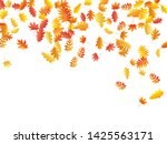 oak  maple  wild ash rowan... | Shutterstock .eps vector #1425563171
