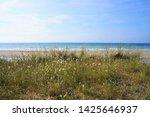 Dunegrass At The Beach Of Sain...