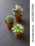three small pots of cacti and... | Shutterstock . vector #1425832484