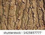 rough tree bark texture... | Shutterstock . vector #1425857777