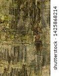 texture of plank wood as... | Shutterstock . vector #1425868214