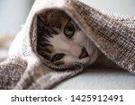 Stock photo cat cute little kitten is sleeping in soft blanket 1425912491