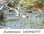 seagull bird flying on nature... | Shutterstock . vector #1425962777