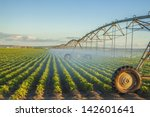 potato field irrigated by a...