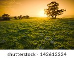 fresh meadow sunrise in the... | Shutterstock . vector #142612324