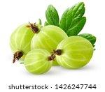 Isolatec gooseberries. bunch of ...