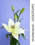 spring flower on blue background | Shutterstock . vector #1426251491