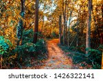a way in the beautiful woods. | Shutterstock . vector #1426322141