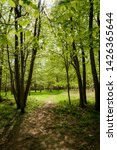 forest trail   footpath.... | Shutterstock . vector #1426365644