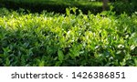 beautiful hedge of plants...