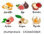 engraved style organic exotic...   Shutterstock . vector #1426601864