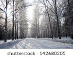Birch Forest In Winter
