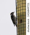 Woodpeckers Feeding At Bird...