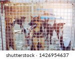 close up stray dogs  life... | Shutterstock . vector #1426954637