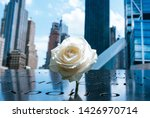 Flower At The Twin Tower...