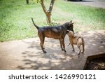 stray dogs playing with them... | Shutterstock . vector #1426990121