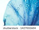Stock photo iris flower macro photo violet beautiful blooming petal after rain 1427032604