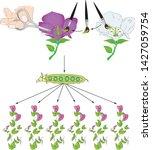 mendel genetics  gregor mendel  ... | Shutterstock .eps vector #1427059754