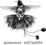 bird hummingbird with open... | Shutterstock .eps vector #1427162954
