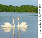 pair of lovers swans | Shutterstock . vector #142721455