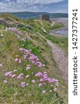 Thrift and wild flowers with pillbox at Porlock Bay