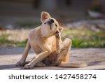 Brown Dog Scratching Itself ...