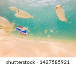 beautiful tropical fish on the...   Shutterstock . vector #1427585921
