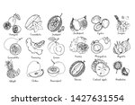 fruits drawn by a line on a... | Shutterstock .eps vector #1427631554