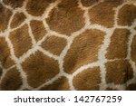 Textured Skin Of Giraffe
