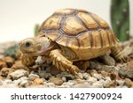 Stock photo  close up baby african spurred tortoise resting in the garden slow life africa spurred tortoise 1427900924