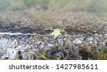 Japanese Tiny Frog 1 Cm Green...
