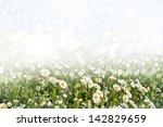 chamomile field. photo. | Shutterstock . vector #142829659
